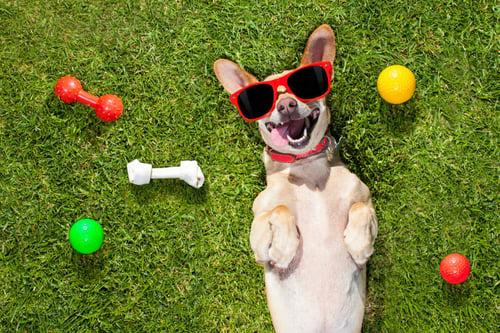 Pet Insurance - A Pet Owner's Best Friend