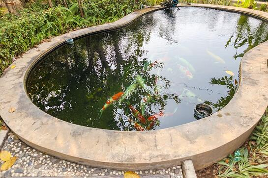Water Features Ponds