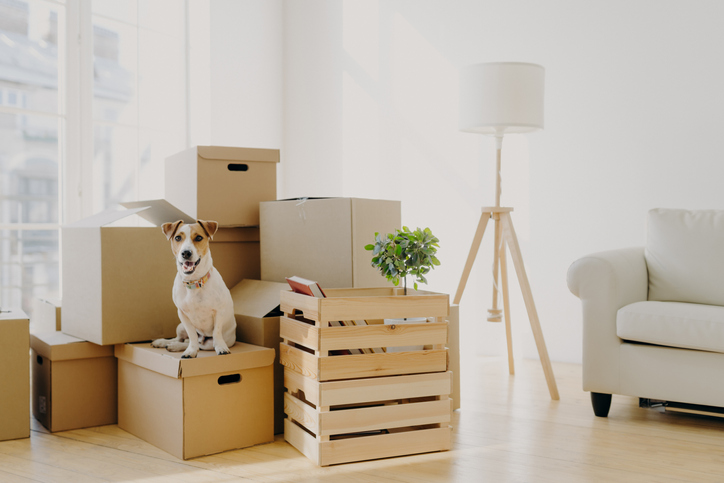 Packing Tips for a Successful Move