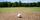 How Golf Courses Can Manage Drought