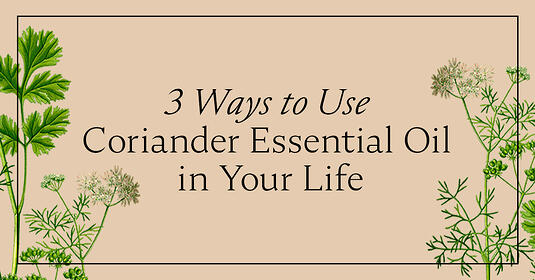 Blog_Aug242020_3 Ways to Use Coriander Essential Oi in Your Life
