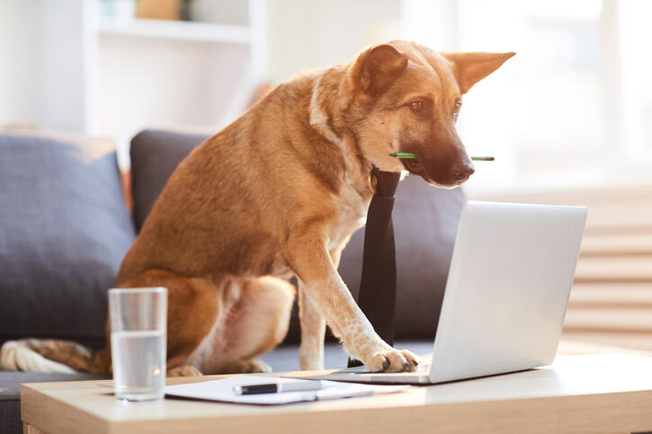 Full length portrait of dog wearing tie siting at desk and using computer, copy space