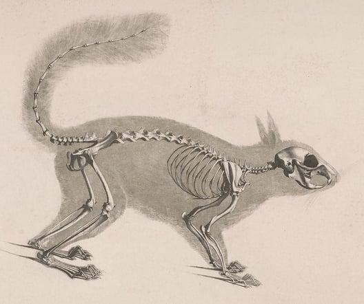 My first walking skeleton