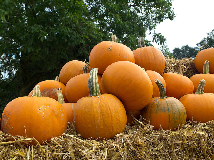 Seniors Out & About in the Twin Cities: The Great Pumpkin