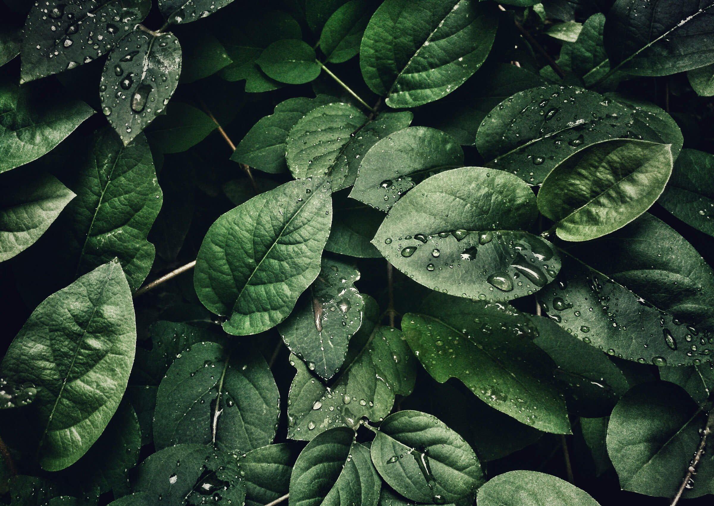 plantagen-case-leaves