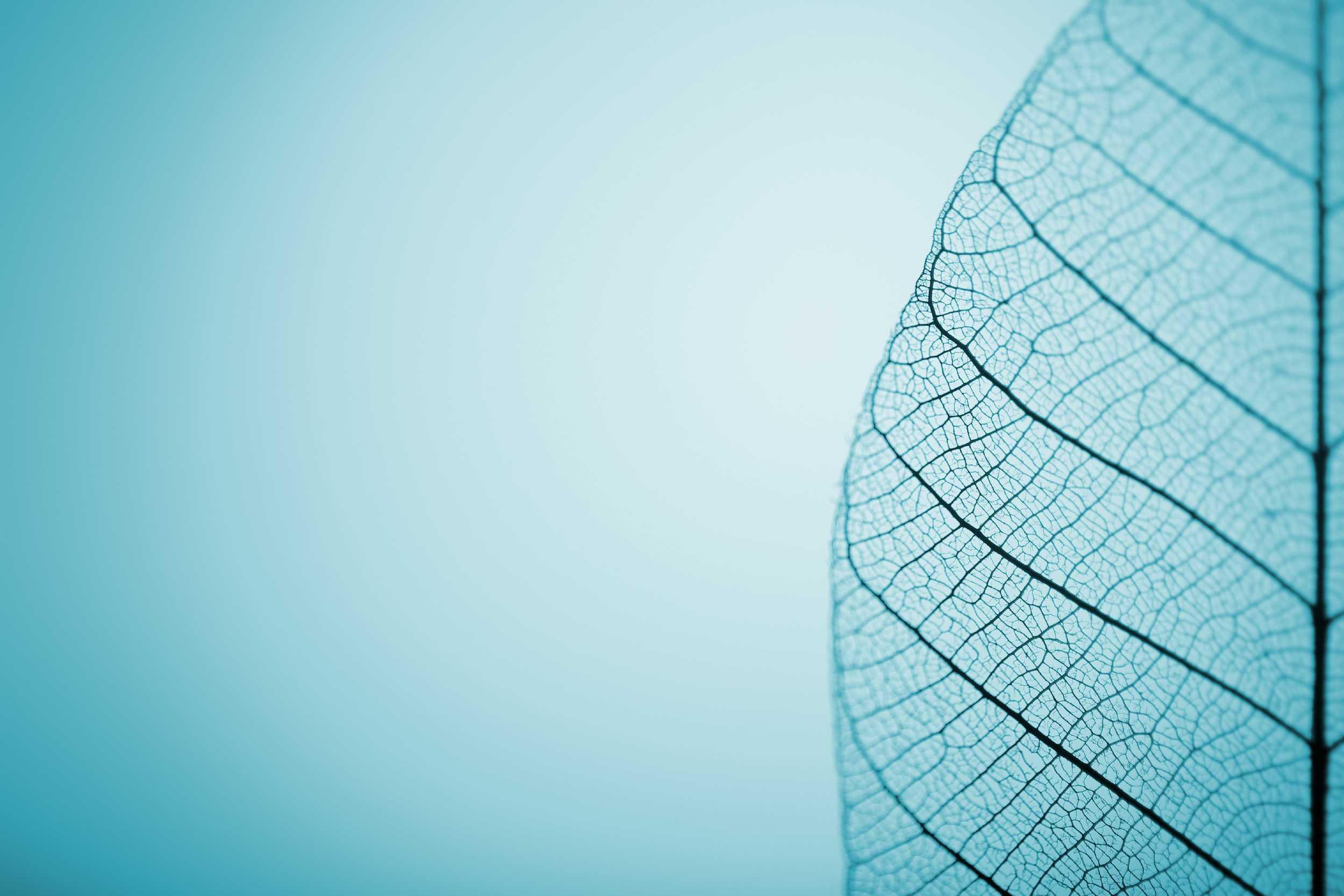 Blue Leaf Banner-1