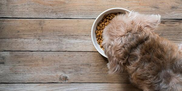 Dog Feeding Guide: The 5 Nutrients To Look For When Buying Dog Food