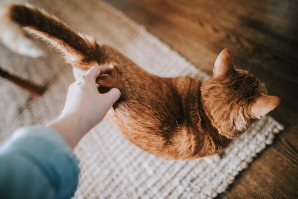 5 Incredible ways your cat says 'I love you'