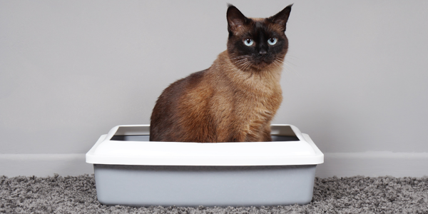 What is the best type of cat litter?