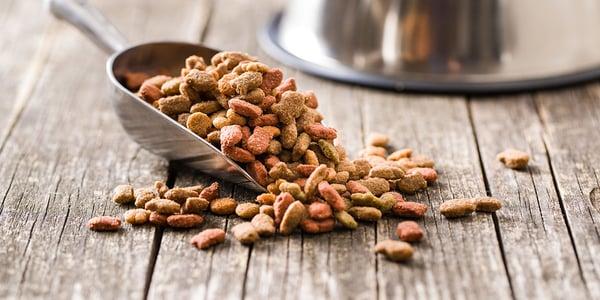 Dog feeding guide: Why Choose Premium Dog Food?