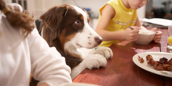 Dog feeding guide: 13 Common human food dogs should avoid