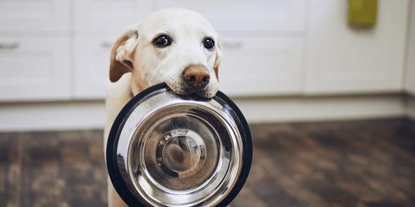 Dog feeding guide: wet vs. dry dog food