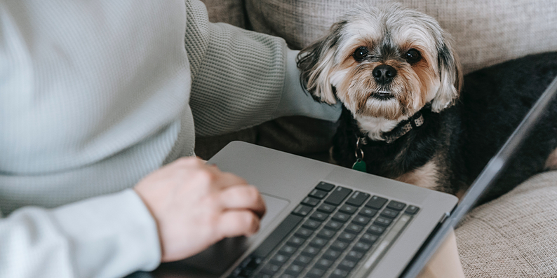 Dog next to laptop, working from home