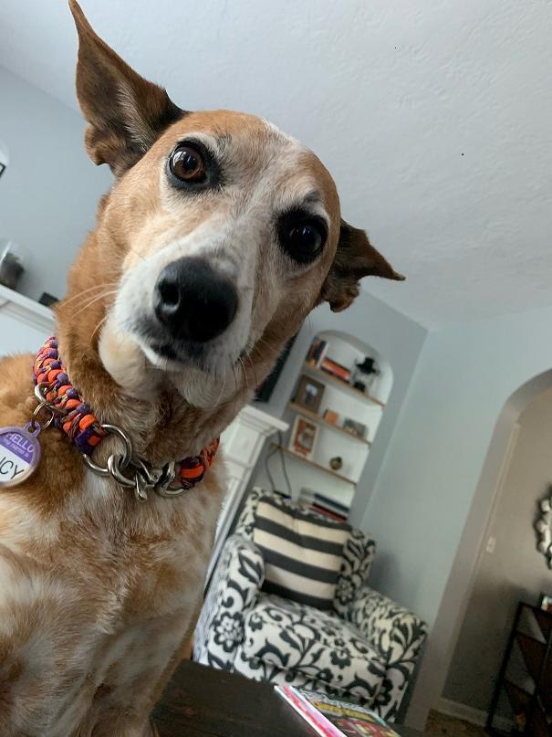 Lucy Sara dog
