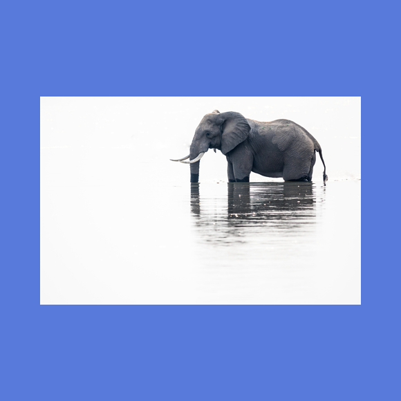 Wat hebben emo, ratio, ruiters en olifanten gemeen?