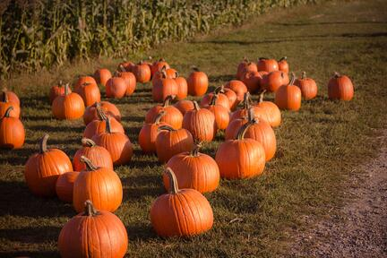 Halloween: trick, treat or harvest?