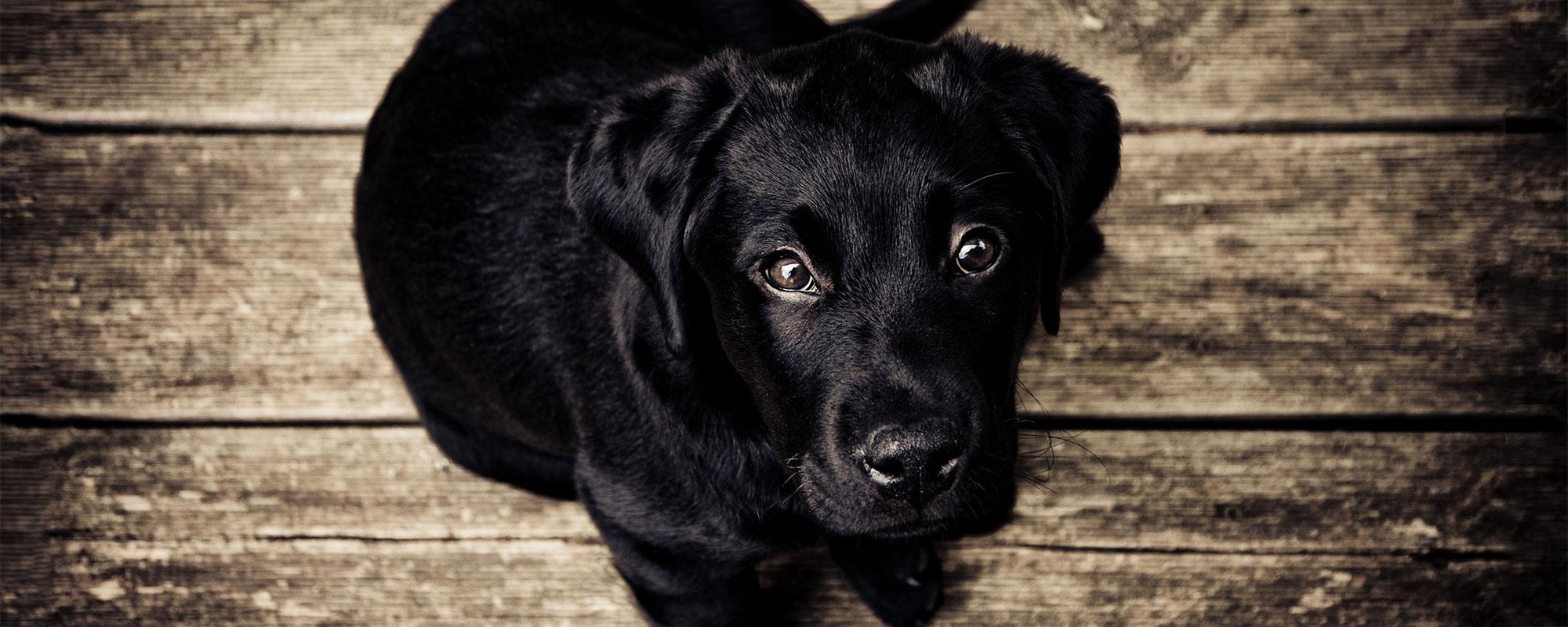puppy-love-main