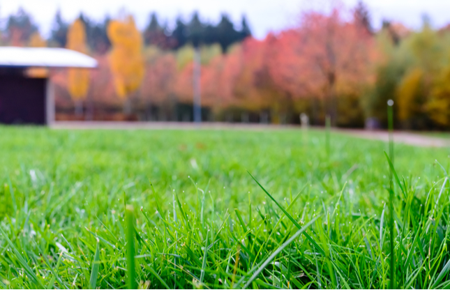 Fall Lawn Care Tips from Jonathan Green, Inc.