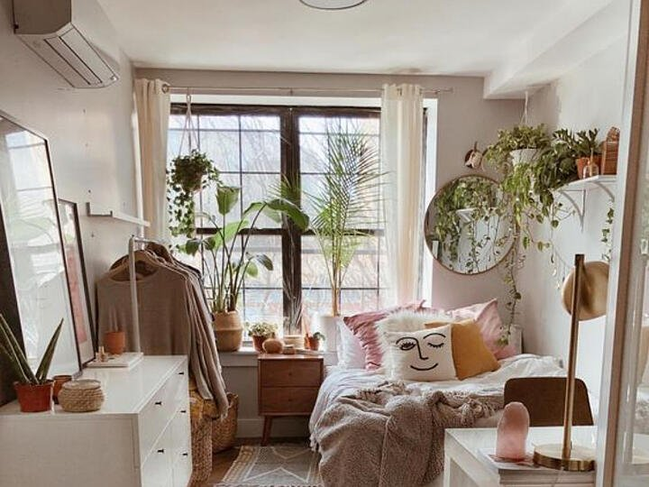 Houseplants for College, Home and Office