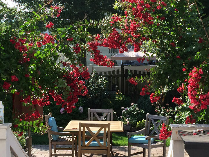 How to Plant and Care for Crape Myrtles