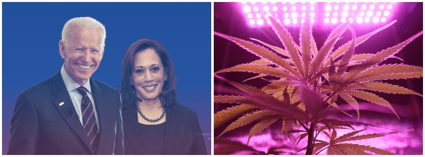 What a Biden/Harris Ticket Means for Cannabis Industry Reform
