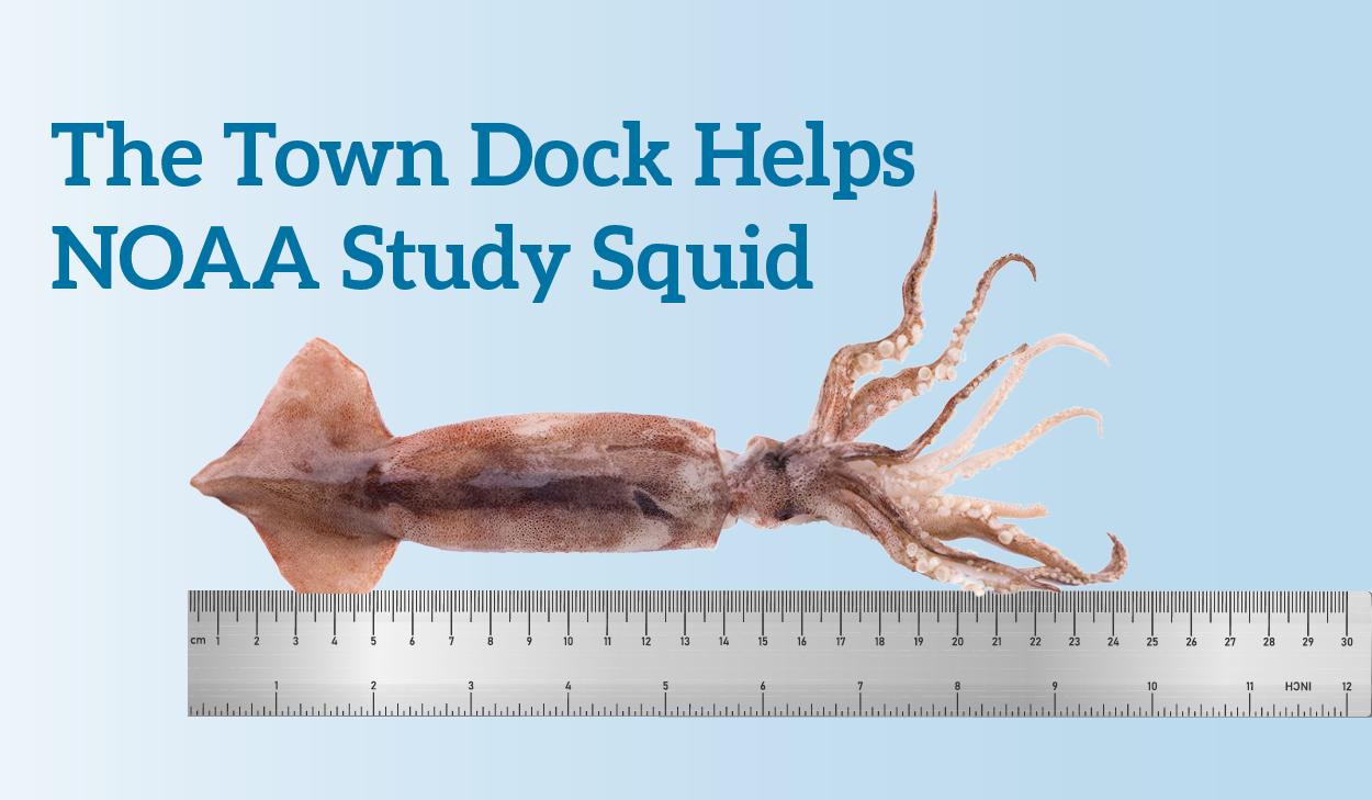 The Town Dock Helps NOAA Study Squid