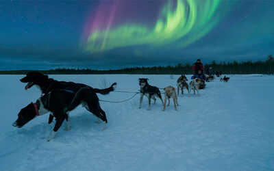 discovering_northernlights_while_dogsledding