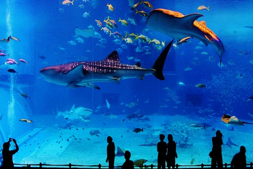 Kaiyukan Aquarium Osaka Teach abroad