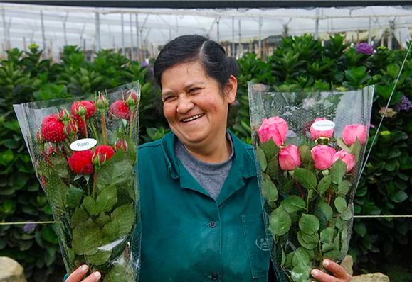 The fairytale of Alexandra Farms- the world's no 1. garden rose grower