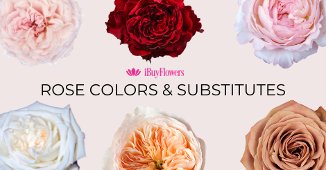 Rose color shades & substitutes