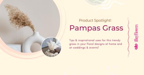 Product Spotlight: Pampas Grass