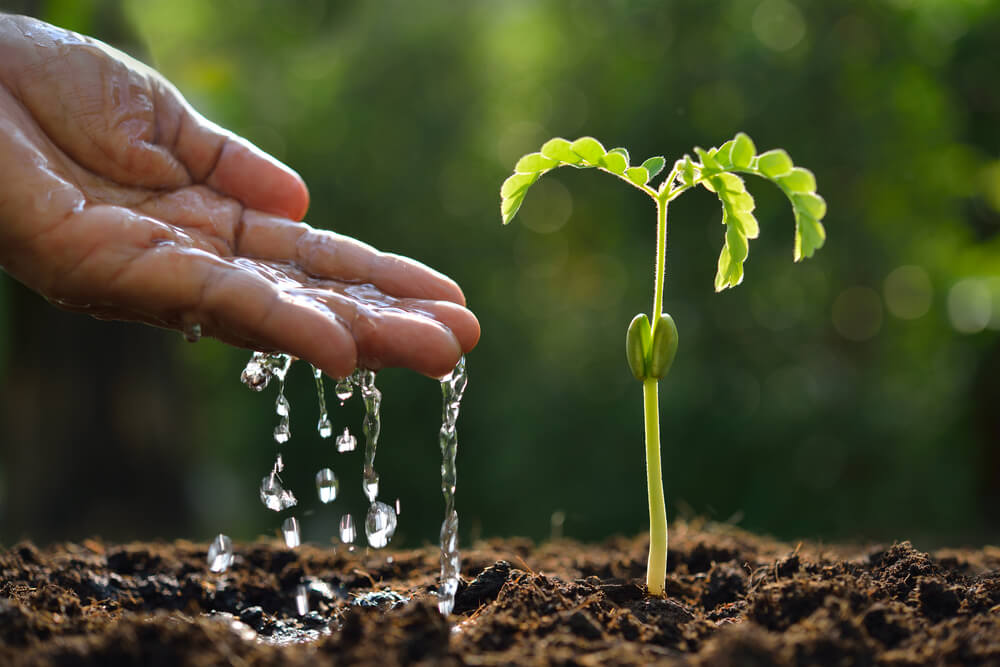 Hand holding clean water next to a sprouting plant