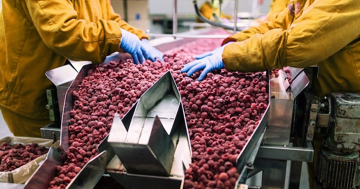 produce-fruit-raspberries-production-line_shutterstock-613803509-copy