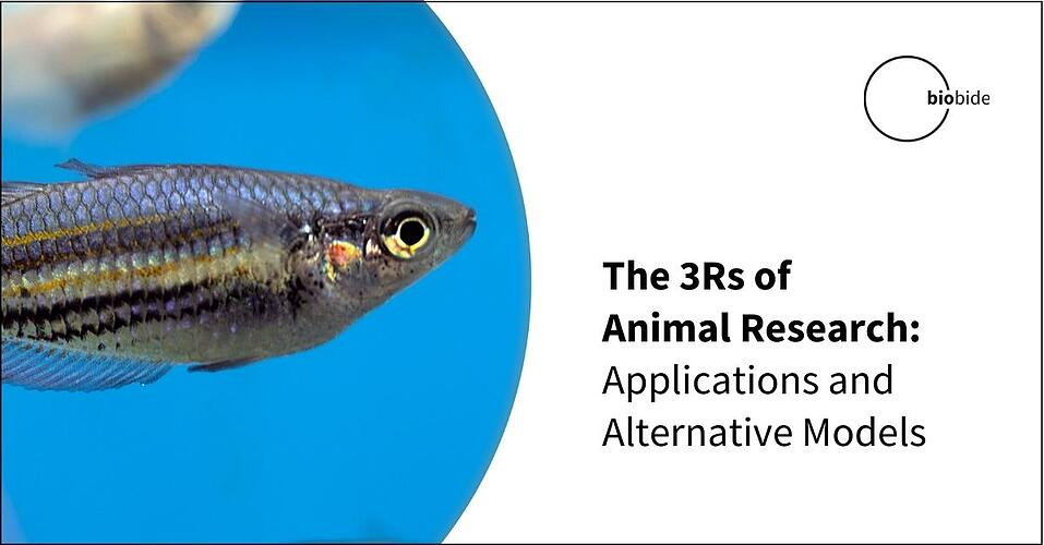 The 3Rs of Animal Research: Applications & Alternative Models