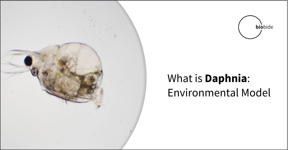 What is Daphnia: Environmental Model
