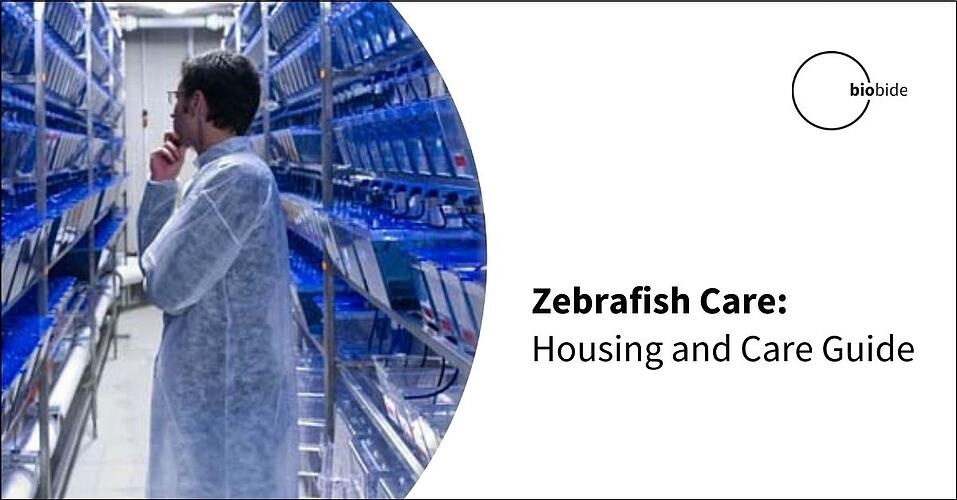 Zebrafish Care: Housing and Care Guide