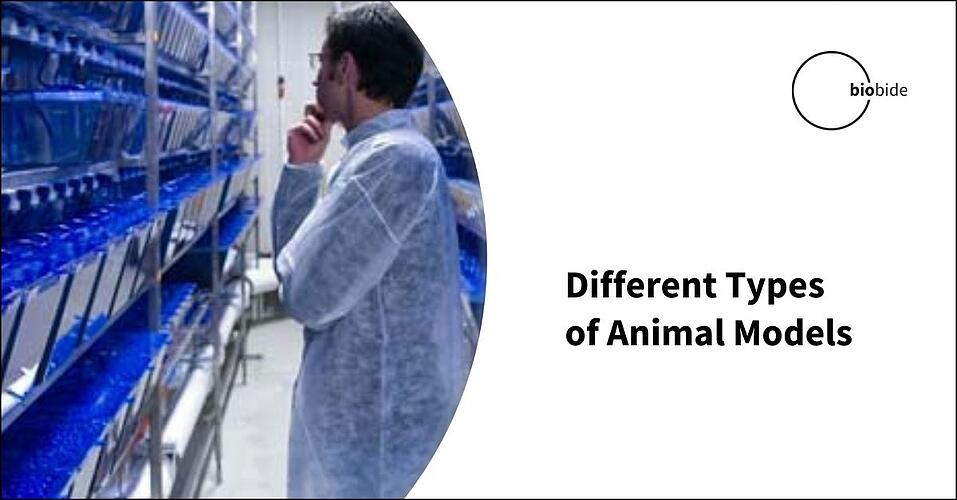 Different Types of Animal Models