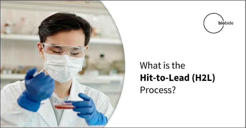 What is the Hit to Lead (H2L) Process?