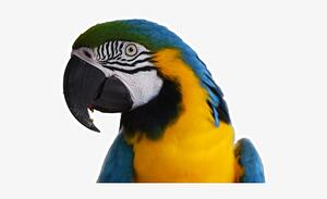 'My parrot ate it' - DVLA certificate online replacement service demonstrates value