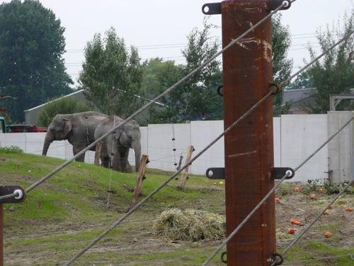 Keerwanden_van_Kemper_voor_olifanten-_en_apenverblijf_Dierenrijk_Nuenen_19_1