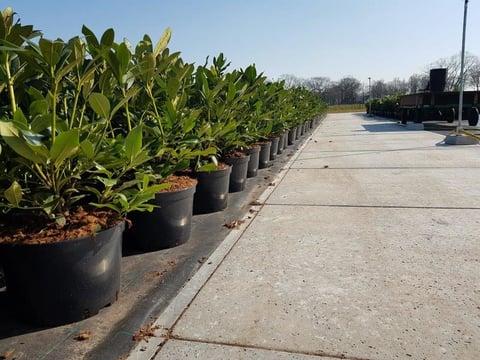 Erfverharding met vastzetsysteem voor Rhododendrons