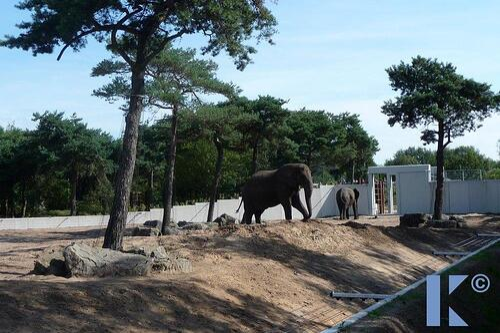 Safaripark_Beekse_Bergen_27_1