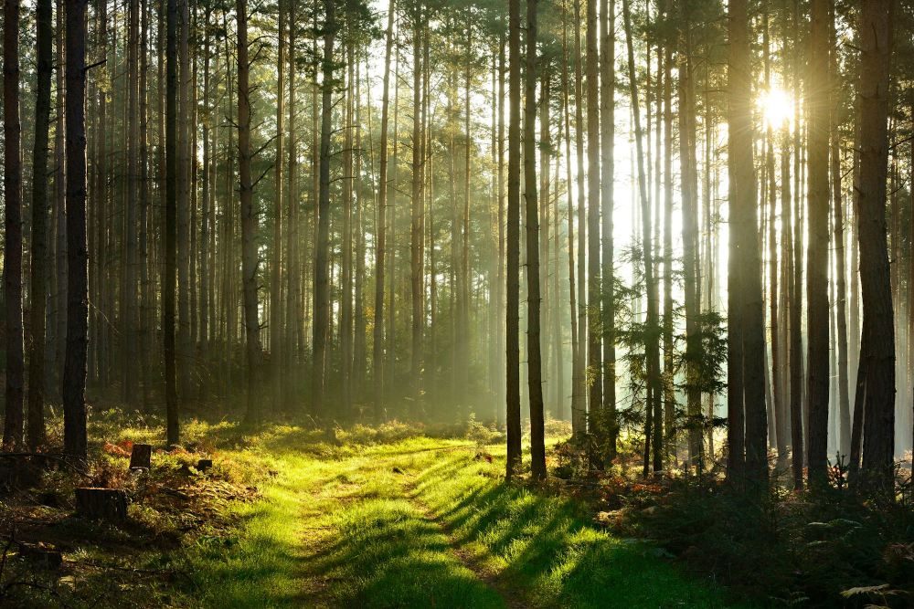 How Much Is Forested Land Worth? (the answer may surprise you)