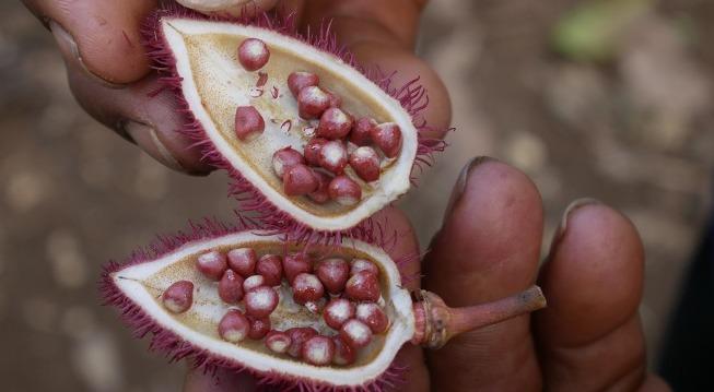 Bio-entrepreneurship in the Amazon