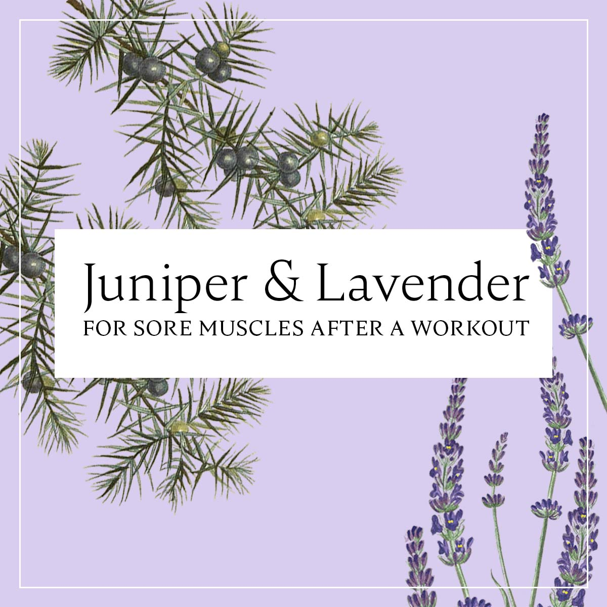 Sore Muscles After a Workout? Blend this Essential Oil with Lavender!