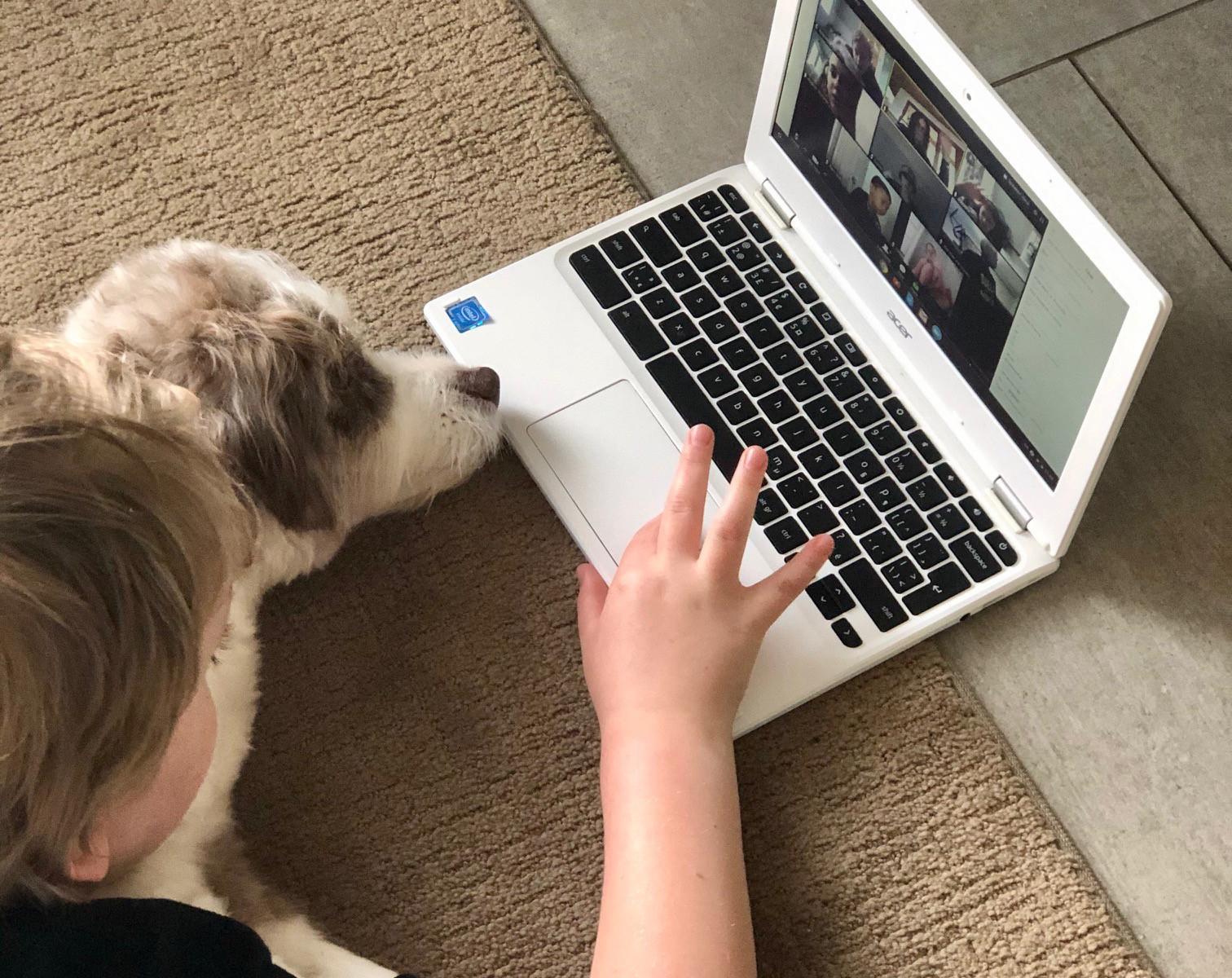 Ozzy homeschooling Fin_crop