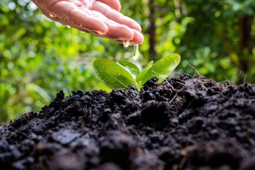 dormant seeding for ground stabilization