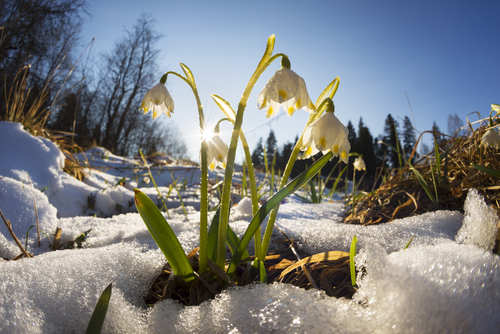 winter soil stabilization