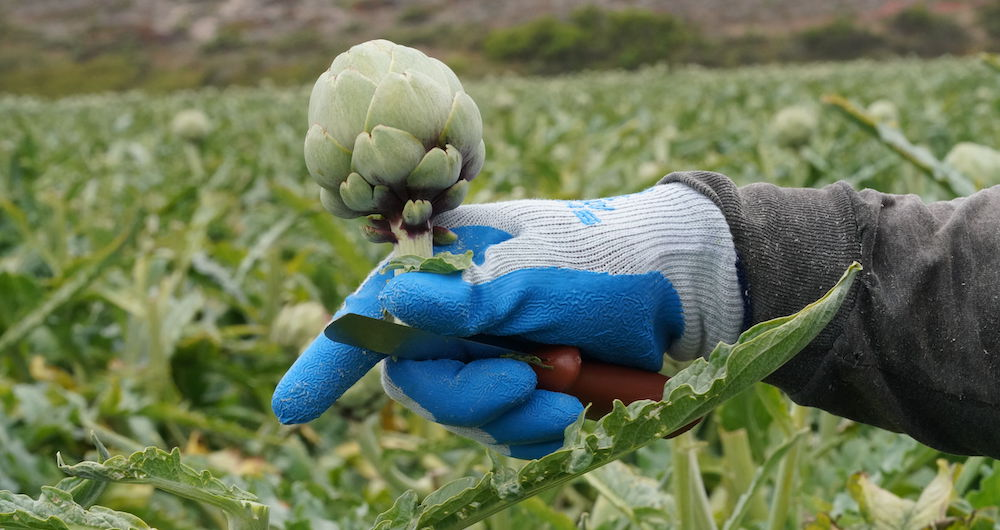 Soluções de sustentabilidade para fabricantes de produtos agrícolas